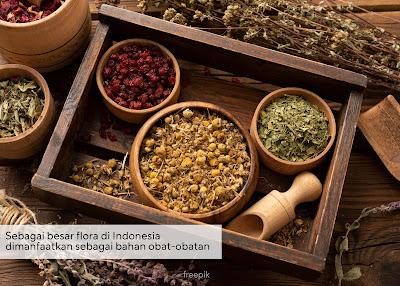 Sumber Daya Flora di Indonesia