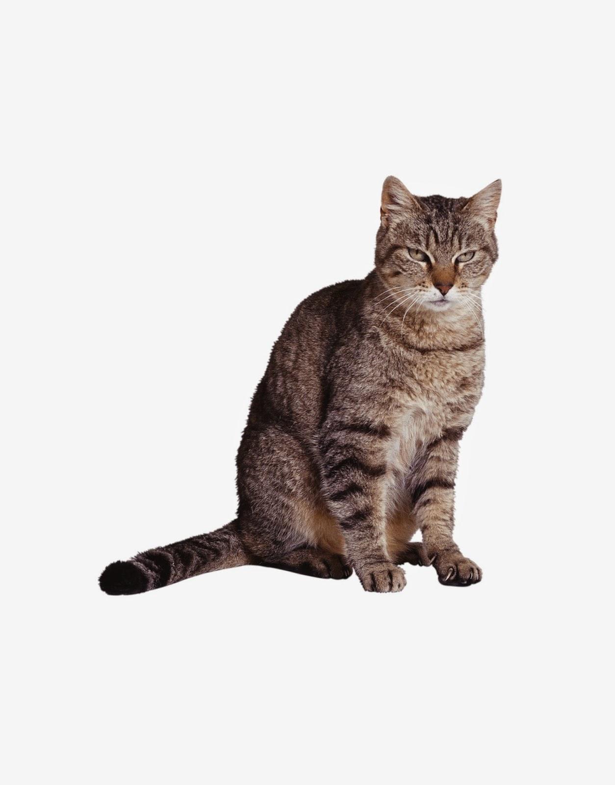 Картинки кошки для детей для занятия, про