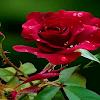 Puisi Pendek Cinta Dan Kehidupan | Romantis Menyentuh Hati