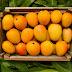 Mango Benefits in Urdu | Aam Ke Fayde