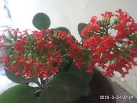 beautiful buds of flower indicating joy