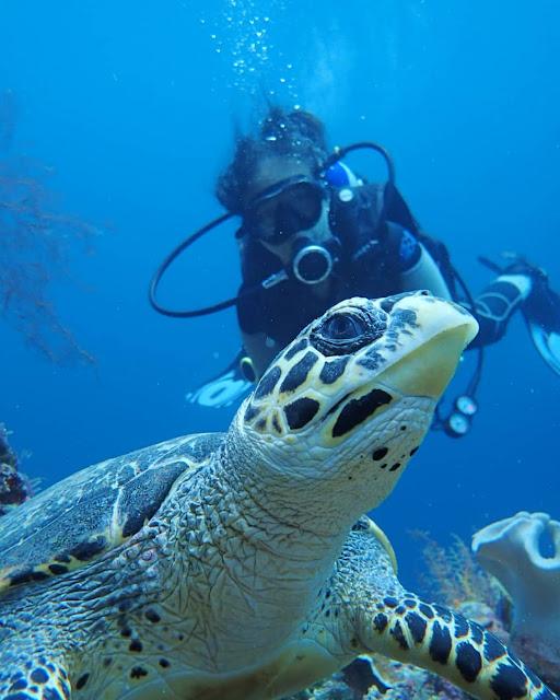 wakatobi marine park Southeast Sulawesi Indonesia