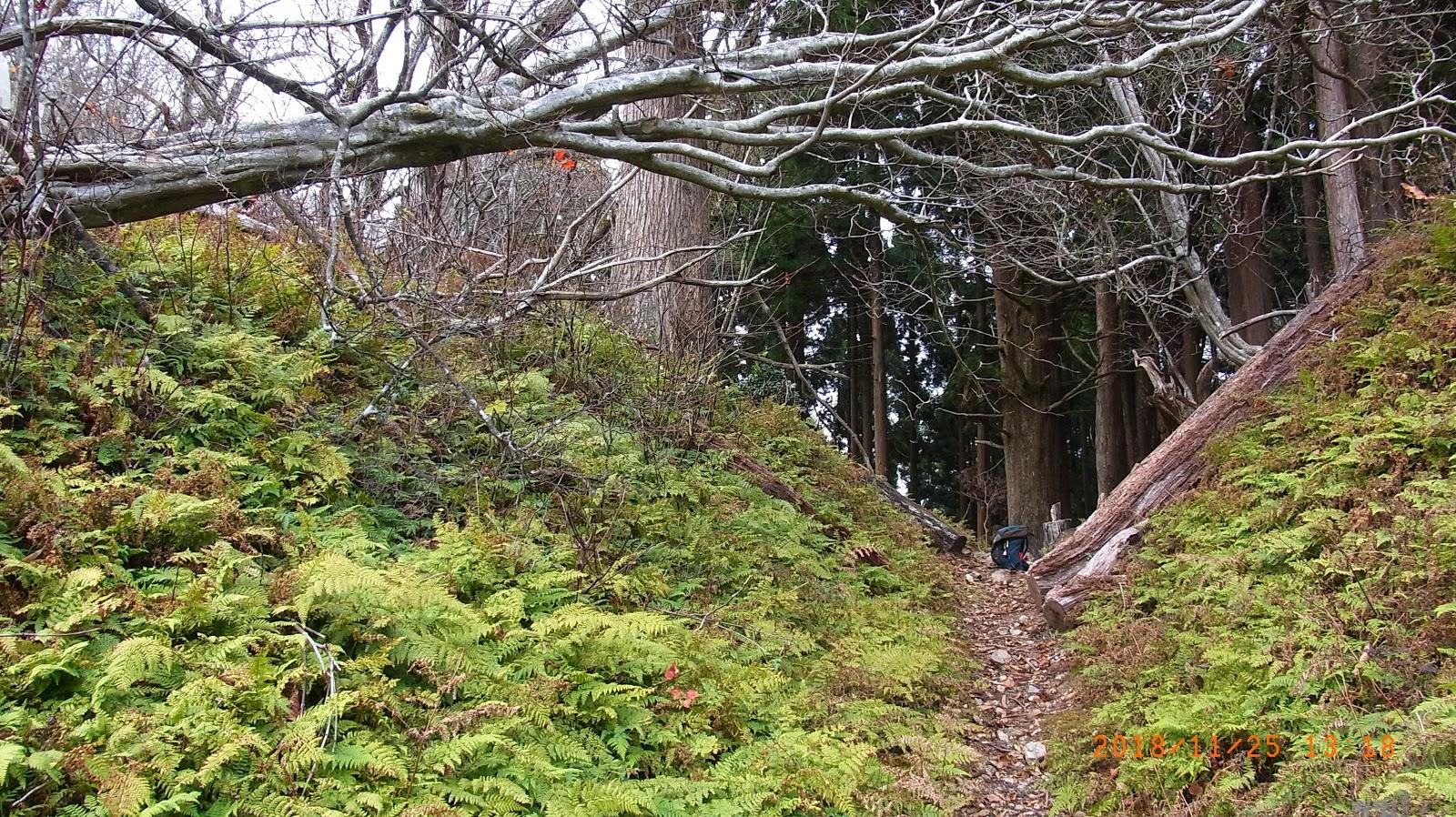 dokodoko-walkin'2: 【北山詣16】尾桟敷から祖父谷峠越えで井戸