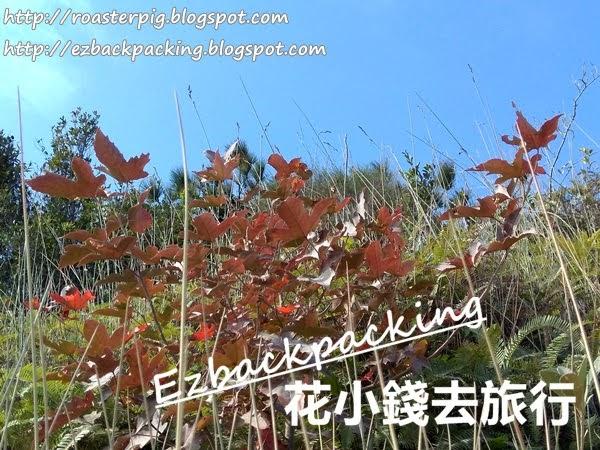 千島湖清景台紅葉2020