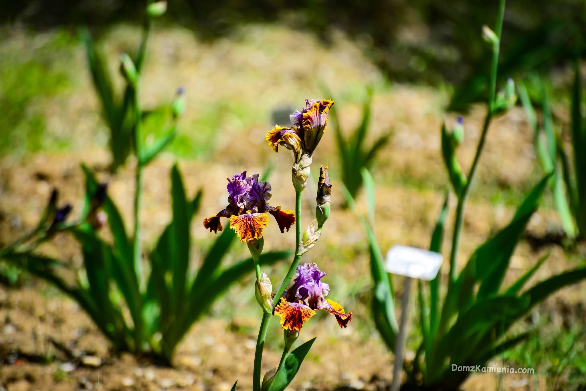 Giardino dell'Iris - Florencja, Dom z Kamienia
