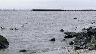 冬の検見川浜