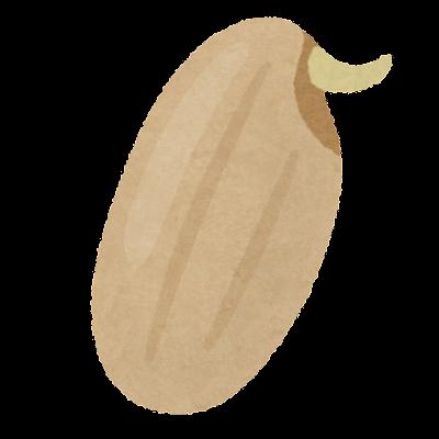 発芽玄米のイラスト(米)