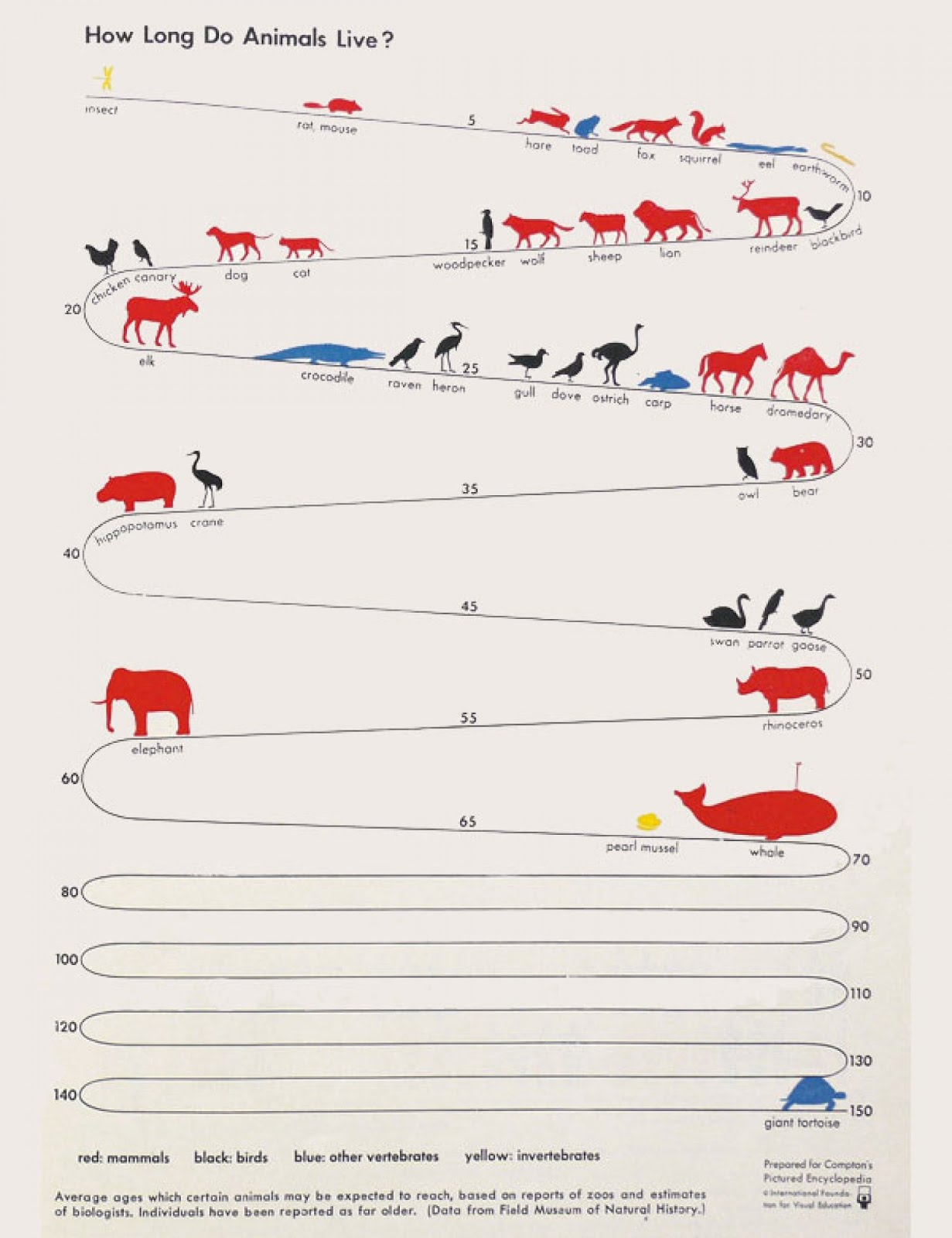 How Long do Animals Live - Infographics