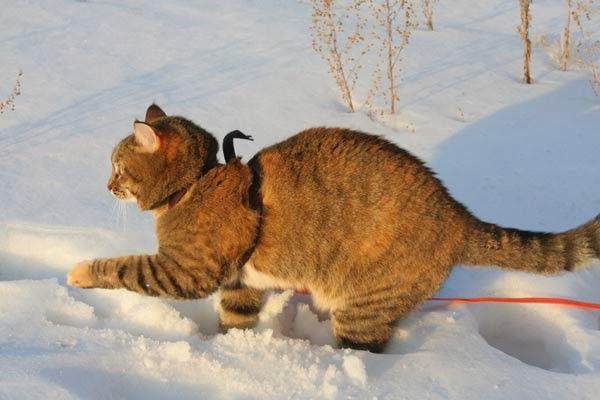 кошка бегает по снегу