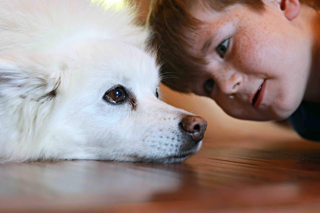3 Ways That Your Kids Can Easily Clean Up Dog Hair Around the House