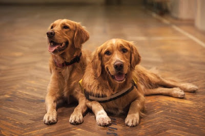 dog training schools online