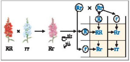 ملخص درس الأنماط الوراثية المعقدة الوراثة المعقدة والوراثة البشرية العلم نور