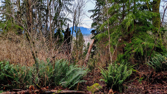 The view from a Vancouver off-leash dog hiking park