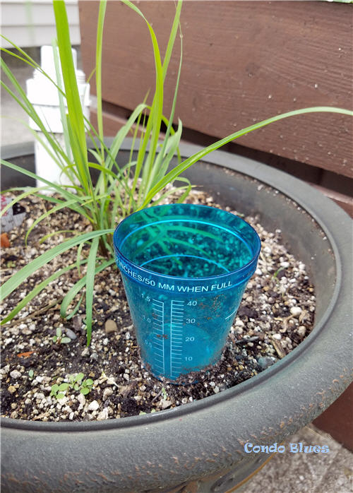 best gardening tip and watering idea
