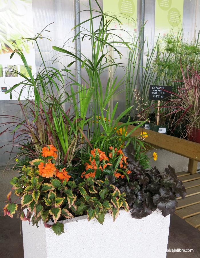 ideas y composiciones de plantas para maceta en septiembre