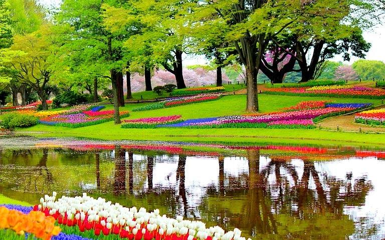 Keukenhov Parkı Lis Şehri