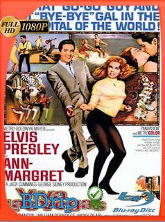 Viva Las Vegas (1964) BDRIP1080pLatino [GoogleDrive] SilvestreHD