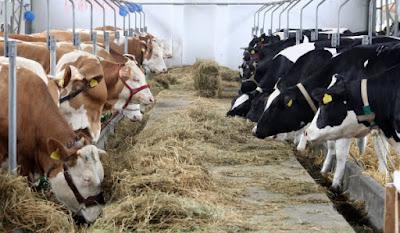15 Tips to keep farm animals healthy