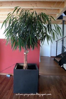 Zimmerpflanzen Groß ein schweizer garten zimmerpflanzen das grün des winters