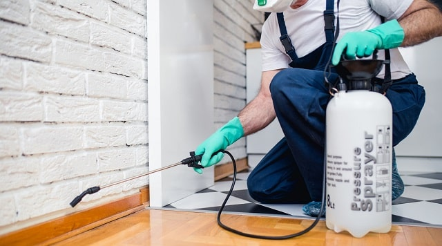 why you need business pest control