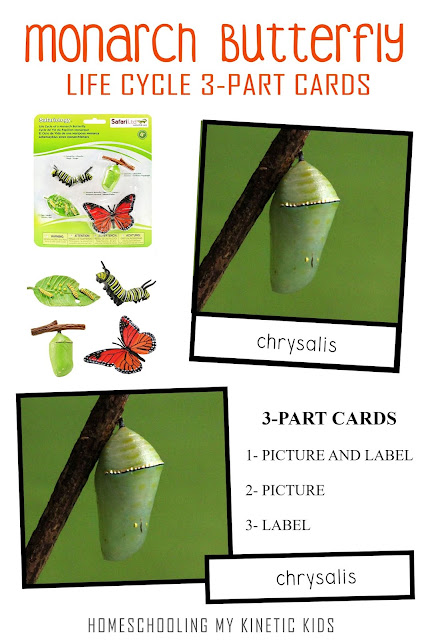 Montessori-inspired 3-part cards to match the Safari Ltd life cycle set with bonus ideas for learning about monarch butterflies.
