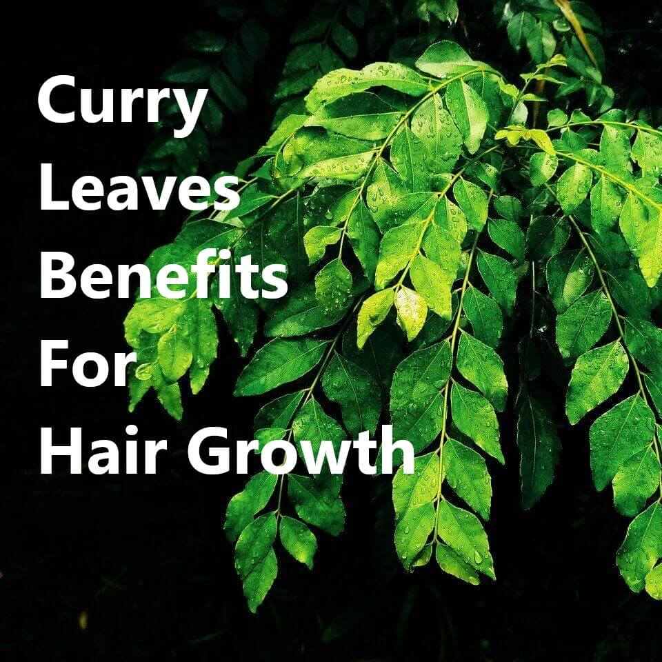Curry_Leaves_Benefits_For_Hair_Growth