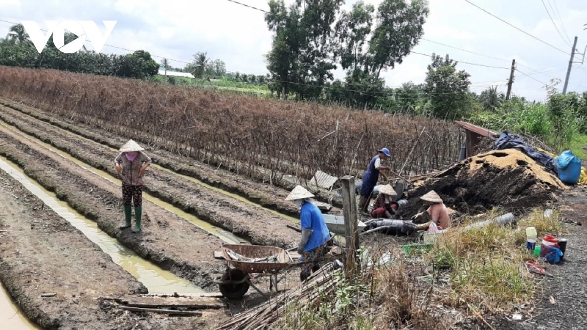 Một số nông dân Tiền Giang gieo trồng hoa Tết nhưng rất lo ngại đầu ra sẽ khó khăn.