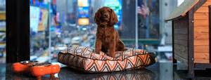 Pet Friendly Hotels in New York