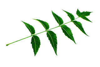 पत्ती (leaves in hindi ) पत्ती के कार्य, प्रकार ,भाग, संरचना क्या है