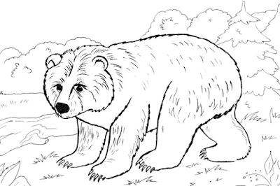 Gambar mewarnai beruang untuk anak - 3