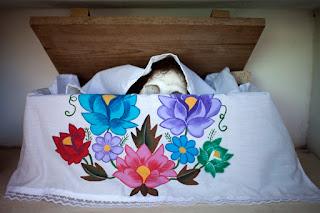 Hanal Pixán es un audiovisual sobre la celebración del Día de Muertos en en el pueblo maya de Pomuch en el municipio de Hecelchakán en el estado de Campeche, en la Península de Yucatán, México.   Este pueblo tiene una tradición única en el mundo en la cual cada año los vecinos limpian los huesos de sus familiares fallecidos, decoran altares y rezan por las almas de sus seres queridos.