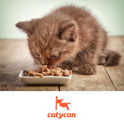 Whiskas para gatitos es malo o bueno