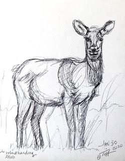"""""""Full Figure Lady"""" elk sketch 4 ©2020  Tina M.Welter"""