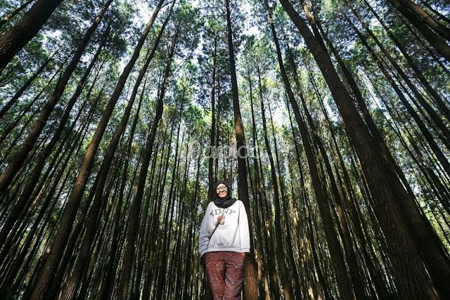 Lokasi Hutan Pinus Mangunan Bantul
