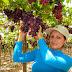 Del campo a la mesa: alimentos sanos e inocuos para los peruanos