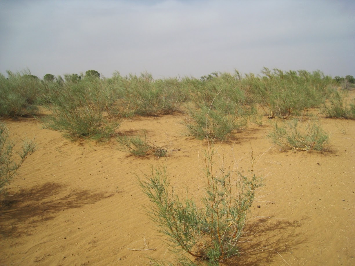Planting Trees can stop deserts, as has been seen in China, India, and now Africa.