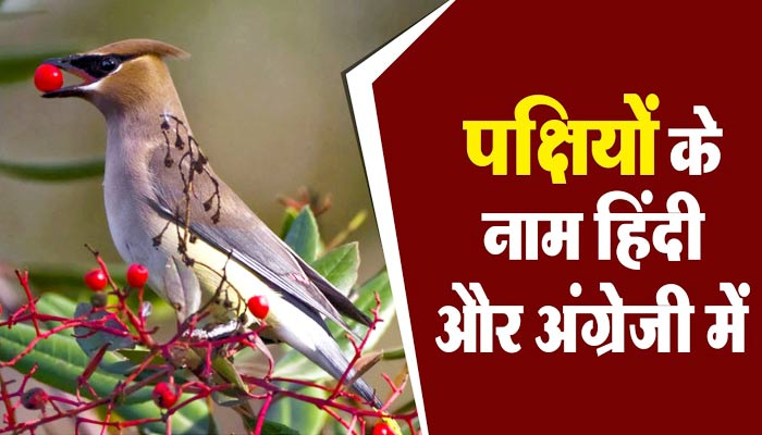 Birds Name in Hindi and English