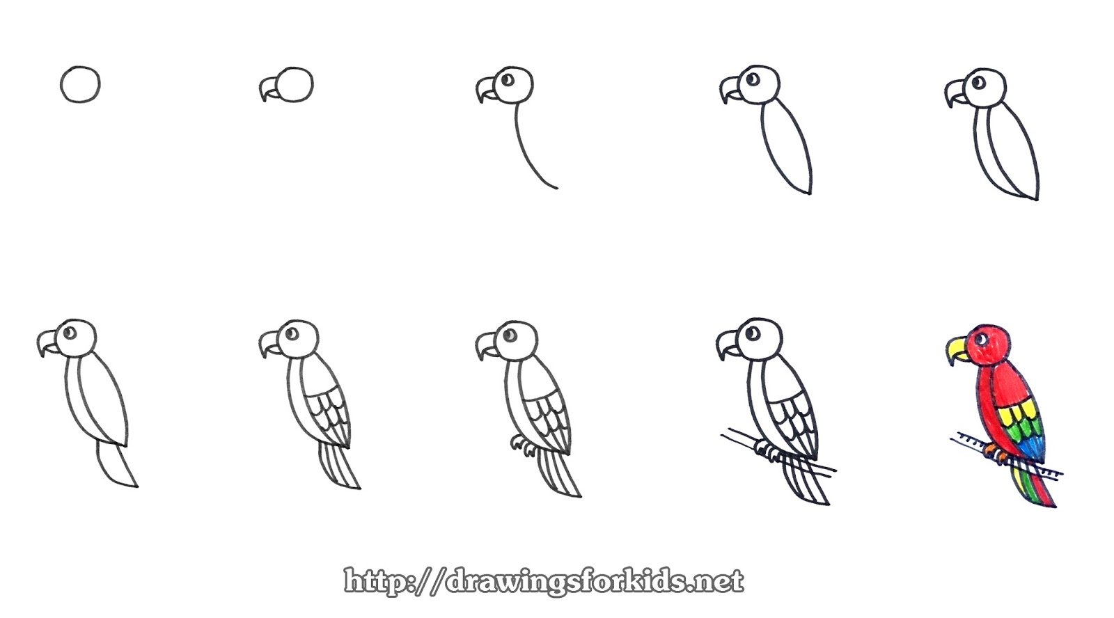 How to draw a Parrot for kids - drawingsforkids.net