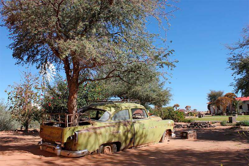 Tree growing through car, trees have grown in these old cars, tree grow inside the car, mother-nature, Trees Growing Through Classic Cars