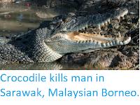 https://sciencythoughts.blogspot.com/2019/10/crocodile-kills-man-in-sarawak.html