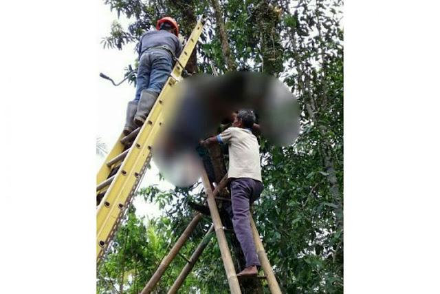 seorang kakek tersengat listrik saat pangkas pohon