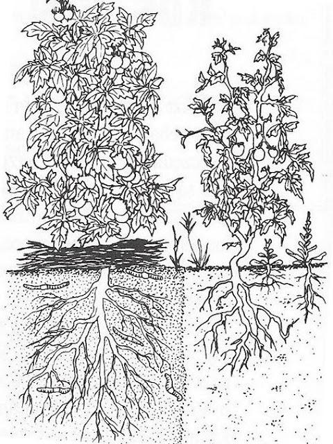 ogród przydomowy, nadawnianie warzyw, nawadnianie roślin, podlewanie roślin, podlewanie warzyw