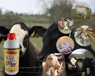 jual viterna nasa 2021
