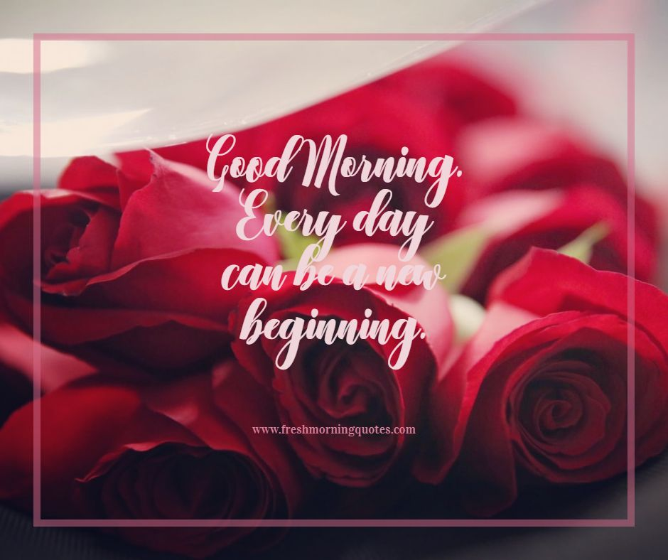 everyday is a new beginning good morning rose images