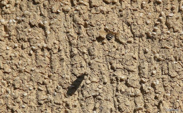 Abeille volant contre un mur