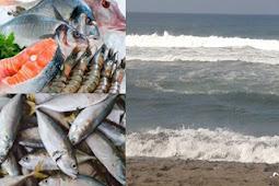 SMK Jurusan Industri Perikanan Laut 4 Tahun