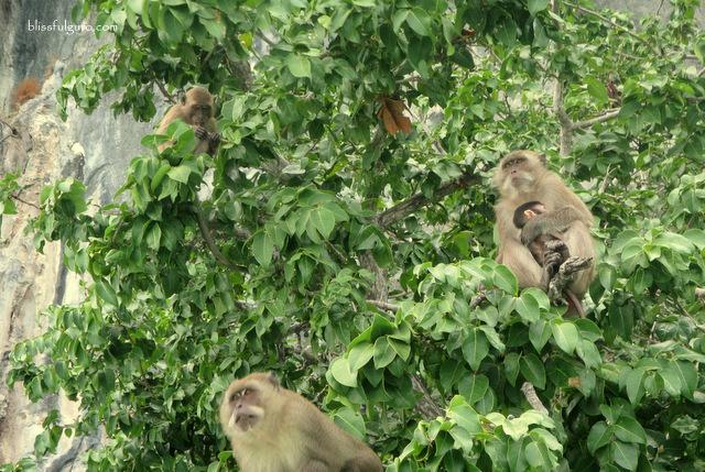 Monkey Beach Koh Phi Phi Thailand
