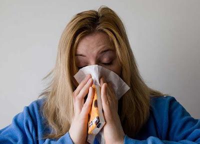 alergias a los perros