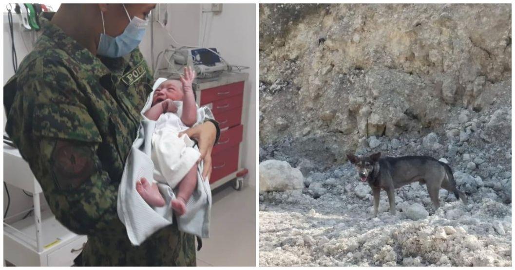 Stray dog helps rescue newborn baby