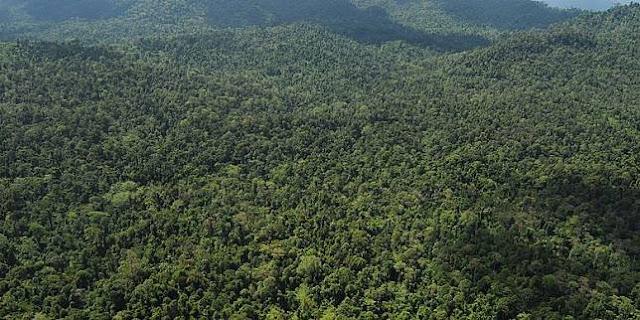 Nekat Pulang Berjalan Kaki dari Malaysia dan Lewati Hutan Belantara, 3 TKI Hilang